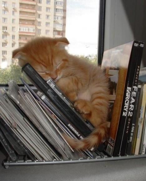 kitty and cds