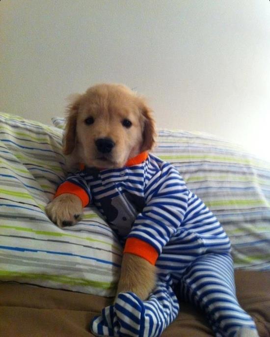 pj puppy